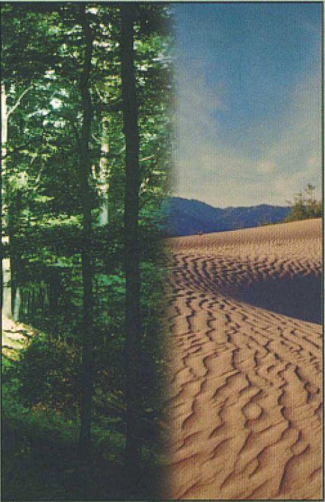 homok emberek 2020 erdő mindkét nézet